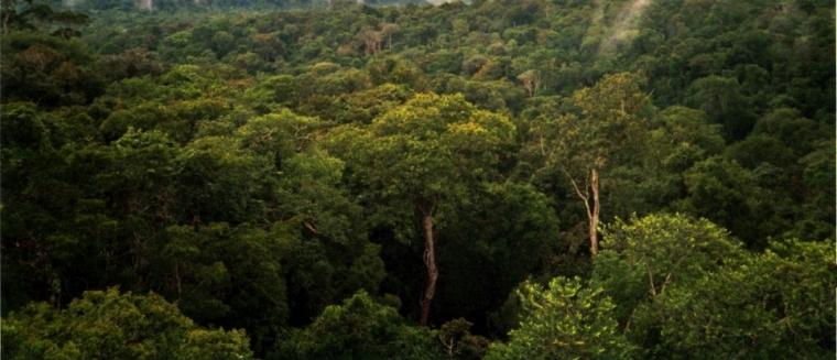 Amazon_Manaus_forest.jpg